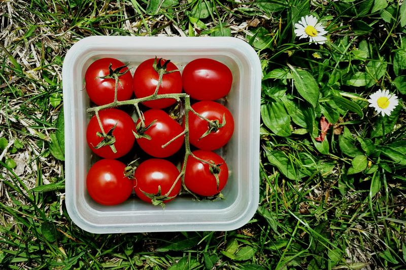 Close-up of tomatoes on field