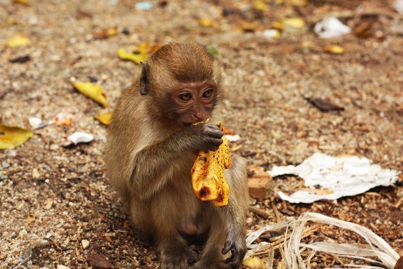 Close-up of monkey on rock