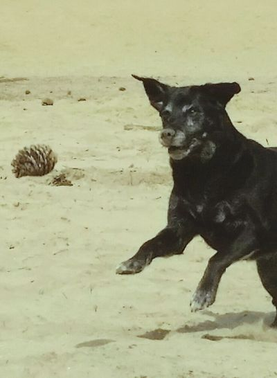 Enjoying The View Blacklabrador Labrador I Love My Dog Dog Lover
