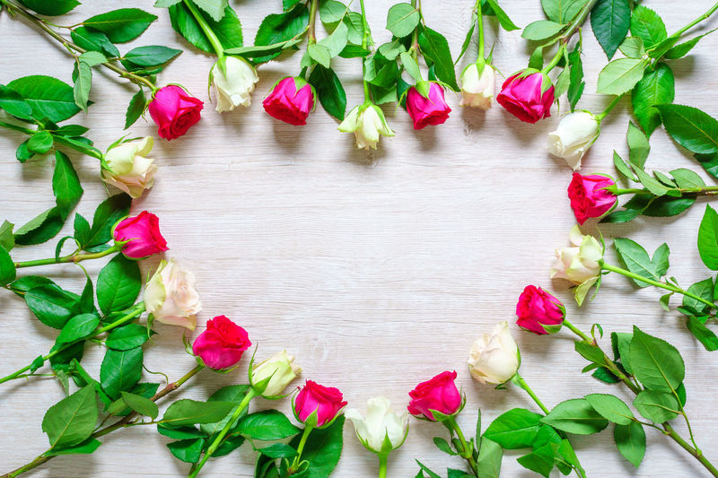High angle view of pink rose on leaves