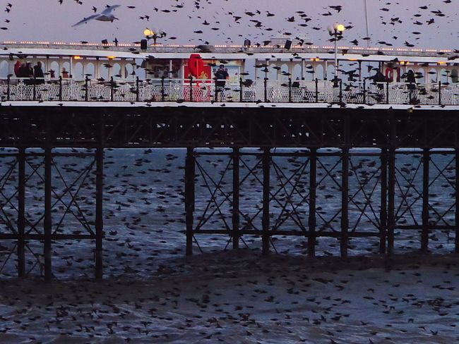 Pattern Pieces Birds Birdsinflight Brighton Brighton Pier Sea And Sky Flock Of Birds Murmuration