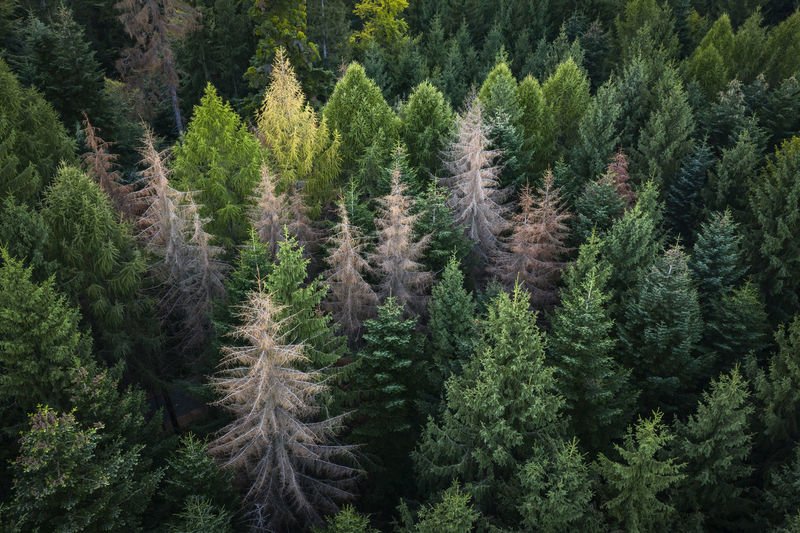 Forest details drone view of a forest pattern. Aerial Shot Drone  Drone Shot EyeEmNewHere Nature Romania Aerial Photography Aerial View Beauty In Nature Drone Photography Evergreen Tree Forest Green Color Growth Landscape Mountain No People Non-urban Scene Outdoors Pine Tree Plant Scenics - Nature Tranquility Tree WoodLand