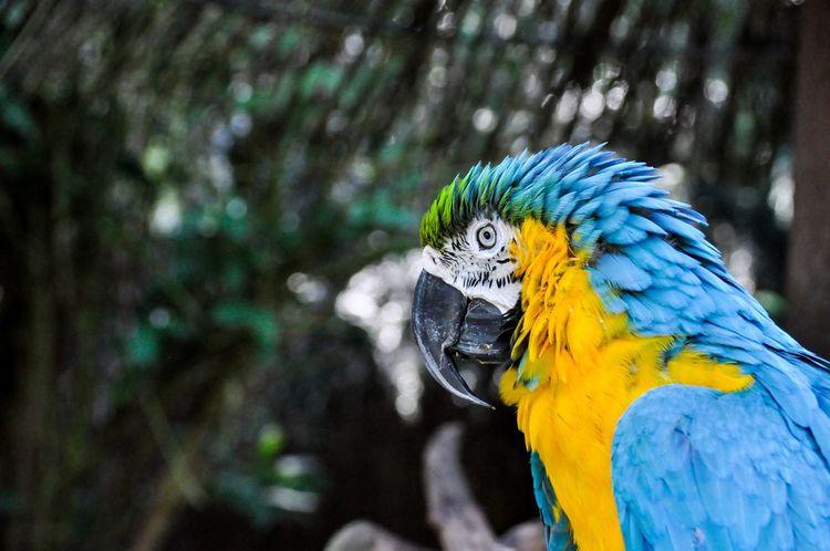Bunter Papagei 2 Parrot Bird Birds Bird Photography Colors Colorful Color Portrait Color Zoo Wildlife