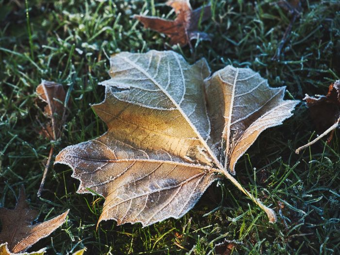 Close-up of frosted leaf on field