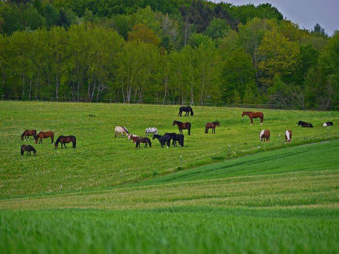 Plant Livestock