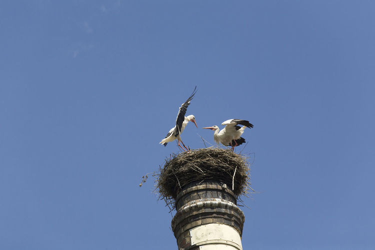 Low angle view of birds on nest against blue sky