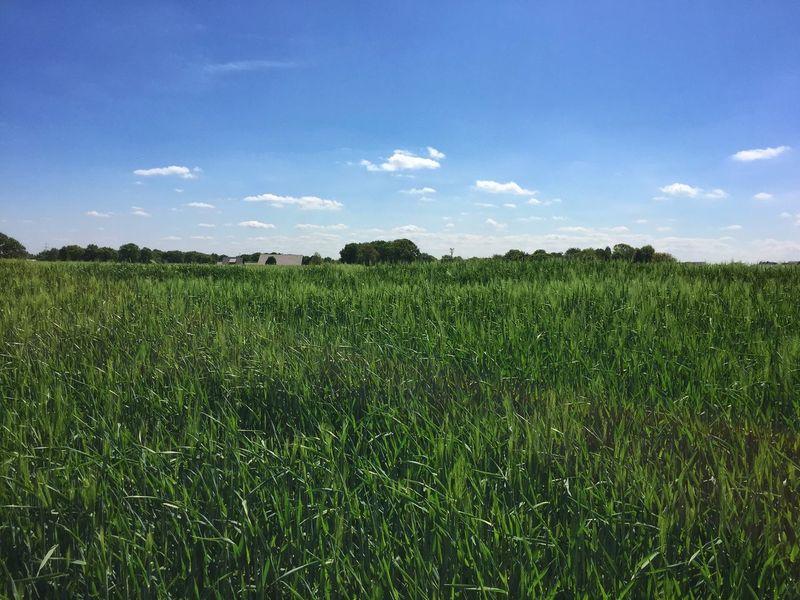 Green fields... Agrarian Field Sunshine Nature Landscape Green Spring Taking Photos