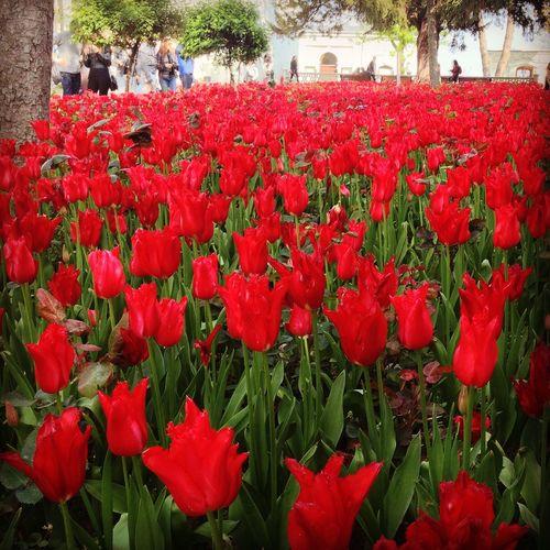 Tulips Topkapi Palace Istanbul Spring Sightseeing Chilling Enjoying Life