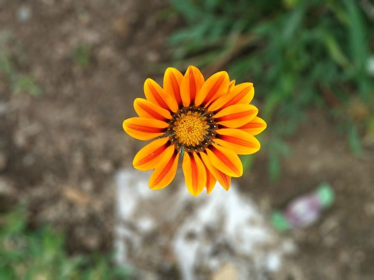 Flower Nature Flower Head Petal Plant Beauty In Nature Fragility