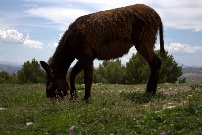 Animal Themes Domestic Animals Donkey Dramatic Angles Field Grass Nature No People One Animal Outdoors POV Sky Zoology