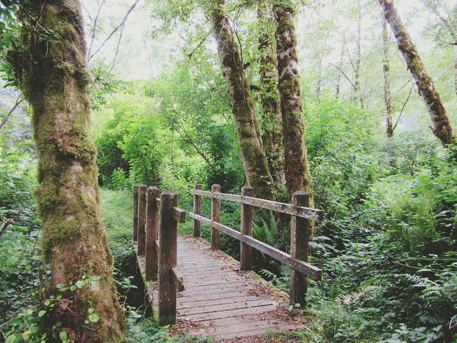 Old Bridge On A Hike Trails Prairie Creek Nature_collection Moss Peaceful Walking Nice Views