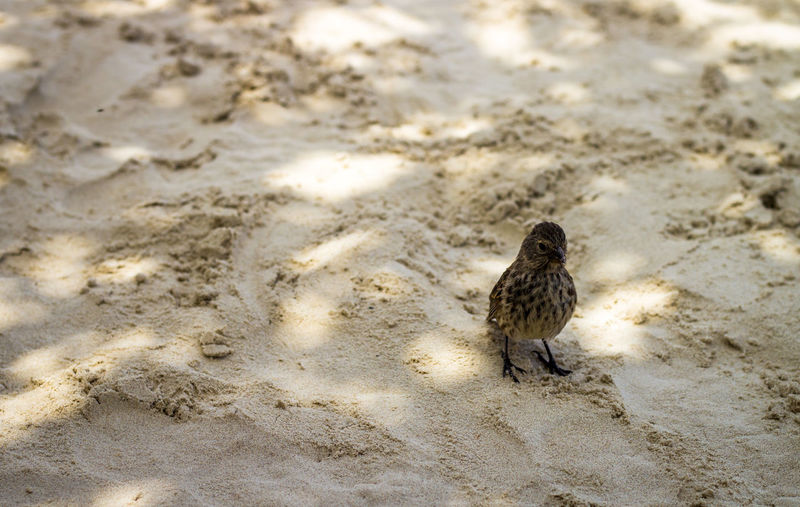 Close-up of bird perching on sand
