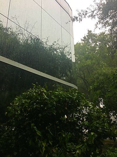 Storm Weather Architecture Raindrops Building Exterior Tree Window Florida Summer Outdoors