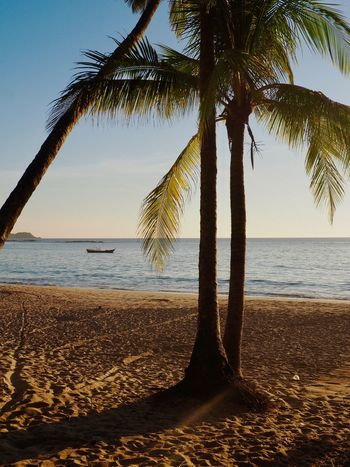 Beach Beauty In Nature Coconut Palm Tree Horizon Horizon Over Water Land Nature No People Outdoors Palm Leaf Palm Tree Plant Sand Scenics - Nature Sea Sky Tranquil Scene Tranquility Tree Tree Trunk Tropical Climate Tropical Tree Trunk Water