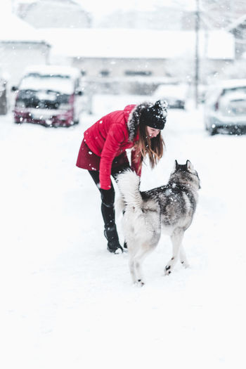 Husky Winter Snow Cold Temperature Dog Canine One Animal Animal Themes Domestic Animal Pets Mammal Warm Clothing Real People Domestic Animals One Person Car Motor Vehicle Clothing Day Snowing Pet Owner