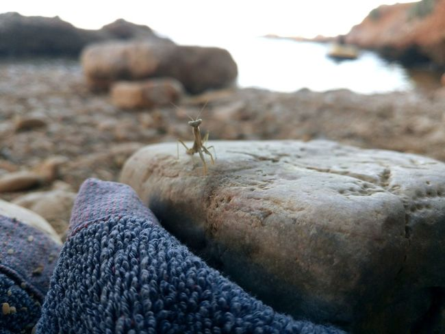 How can you not feel peaceful at a place where a Mantis does? Summertime Animal Beach Animal Wildlife Sea Nature Mantis Rock Rock Formation Mantis collections Summer Macro Seashore SeasideWater Beauty In Nature Breathing Space