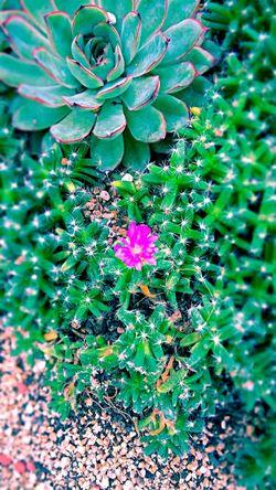 Snap 일상 Daliy Gpro2 Flower Yeah Springtime! 봄 꽃 Spring Lomo