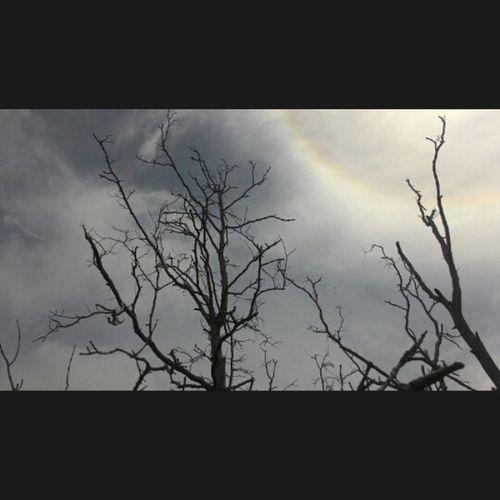 Pokok bakau bersempadan dgn nunukan. 📱🌞🌲😁 Nn Nicedays Barulagini BeHumble Creative Light And Shadow beawesome becool begood dayoftheday likeforlike tagfortag malaysia sabah asia belia aimtothebest forest lucky 🙏😀