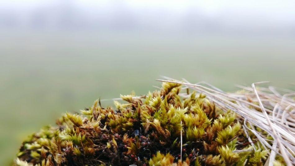 EyeEm Nature Lover Moss Mossporn Macro_collection Macro Nature Elegance Everywhere Backgrounddefocus
