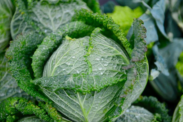 Savoy Cabbage Market Market Stall For Sale Retail  Organic Raw Food Green Color Leaf Plant Part Growth Food And Drink Freshness Plant Healthy Eating Close-up Wellbeing Nature Food Vegetable Cabbage No People Drop Water Day Outdoors