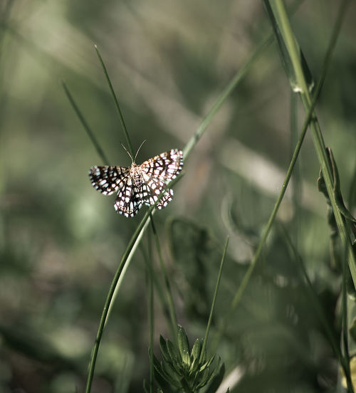 Close-Up Of Butterfly On Grass