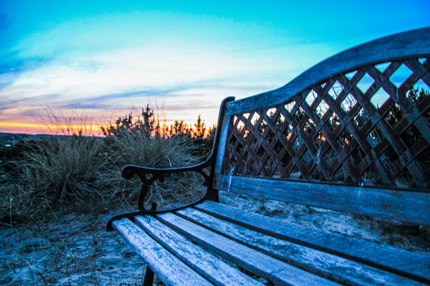 Bench Denmark Growth Pine Beauty In Nature Cloud - Sky Cold Temperature Day Dune Landscape Nature No People Outdoors Pine Tree Sand Scenics Sky Sunset Tranquil Scene