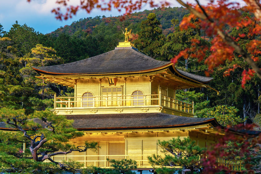 Kinkakuji Temple (The Golden Pavilion) with autumn maple in Kyoto Architecture Autumn Beauty In Nature Building Exterior Built Structure Day Garden Golden Pavilion  Growth Kinkakuji Landmark Maple Leaf Nature No People Outdoors Plant Roof Sky Travel Destinations Tree Zen