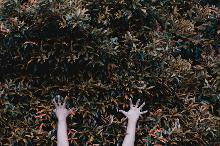 Close-up of hands against plants