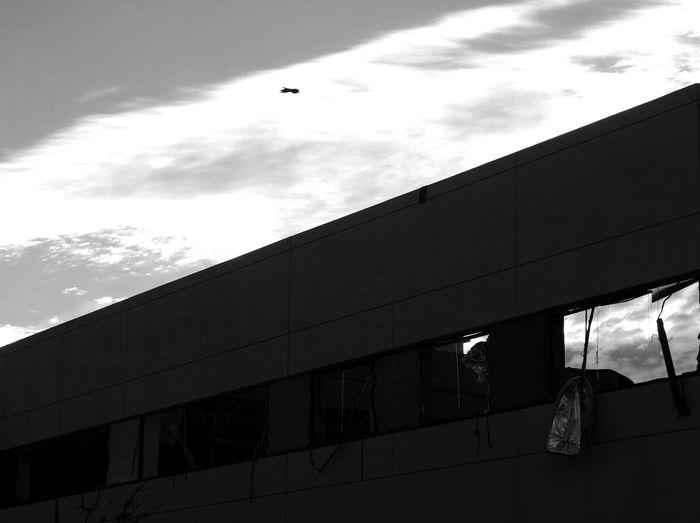 Sky Contrast Monochrome Blackandwhite Bird Building