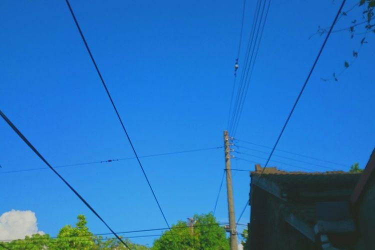 Blue Sky, Birds Fly Sunny Wires In The Sky