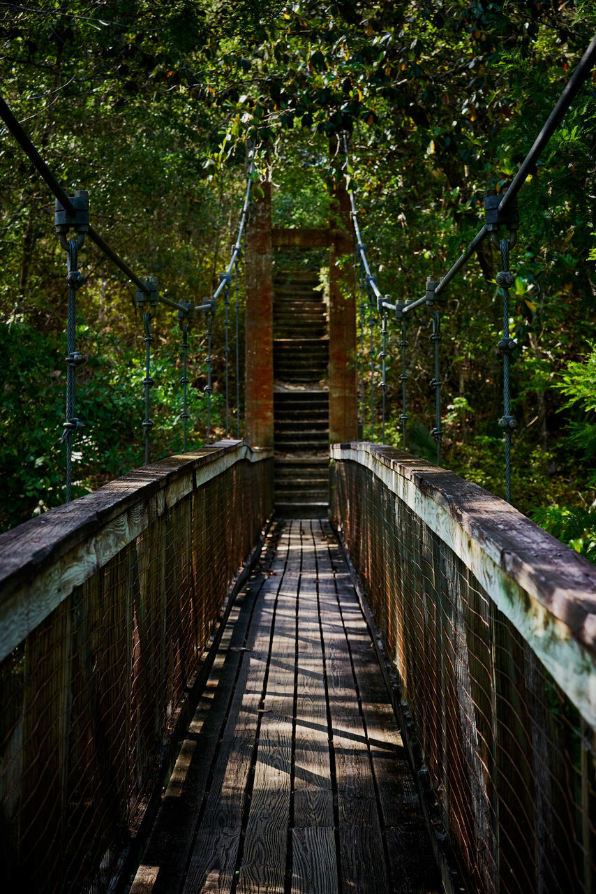 tree, railing, forest, the way forward, outdoors, day, no people, footbridge, nature, bridge - man made structure, architecture, built structure