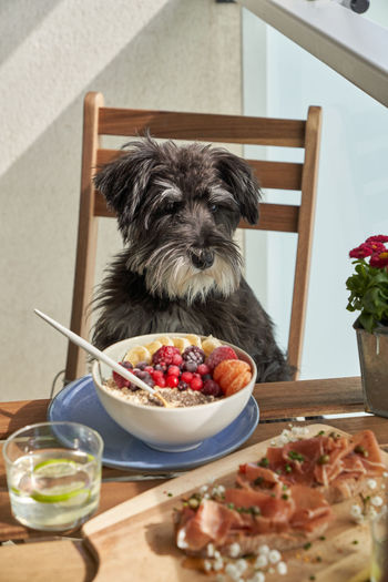 Small dog in bowl on table
