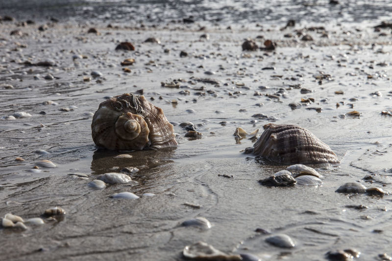 High Angle View Of Seashells On Wet Shore At Beach
