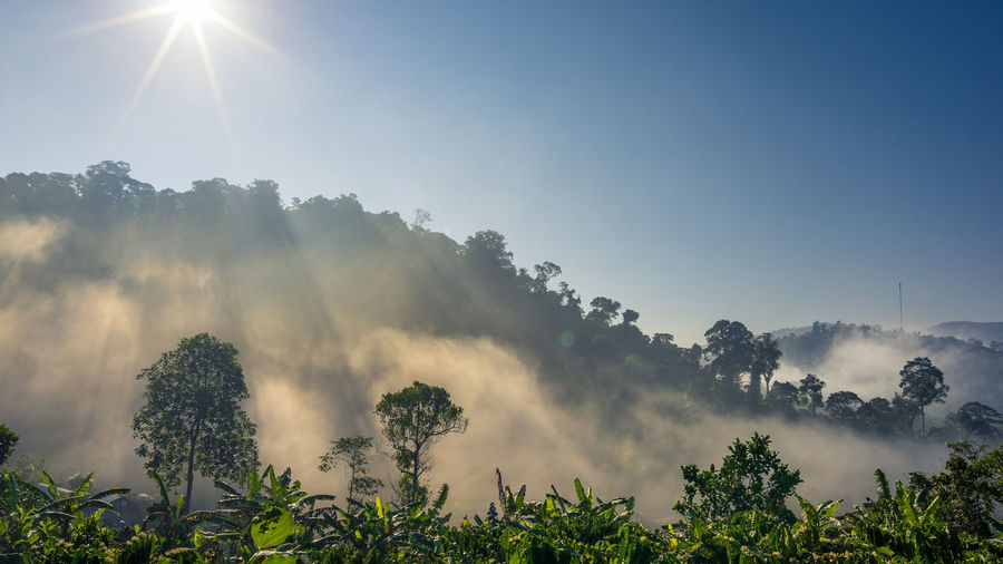 Morning in highland, Vietnam Tây Nguyên Central Land Vietnam Highland Mountain Hill Sunrays Sunshine Forest Plant Nature Environment Tree Morning Morning Light New Day Centrally Vietnam Tree Dawn Fog Sunlight Sun Morning Mountain Sunbeam Sky Landscape Foggy Mist Weather