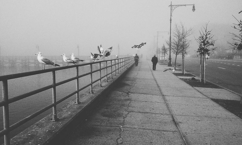Capture The Moment Coming In Ratswithwings Mine Mine Mine  GeeNiusPix Brooklyn Fog Seagulls Fishing Fishing For The Birds