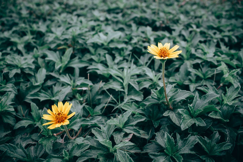 Close-up Flower Flower Head Flowering Plant Focus On Foreground Fragility Green Color Inflorescence Orange Color Outdoors Plant Yellow