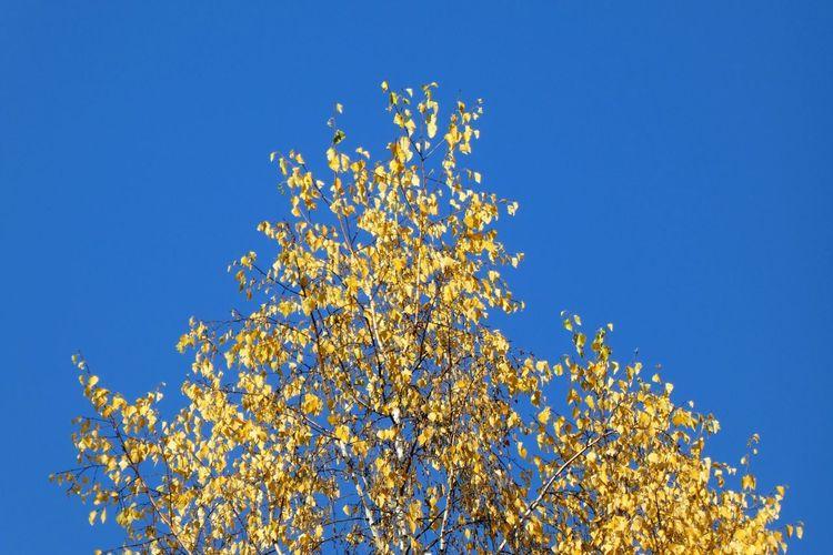 Plant Blue Sky