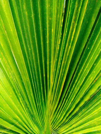Colour Of Life Pivotal Ideas Palm Trees!! Green Green Green!  Front Yard Photography