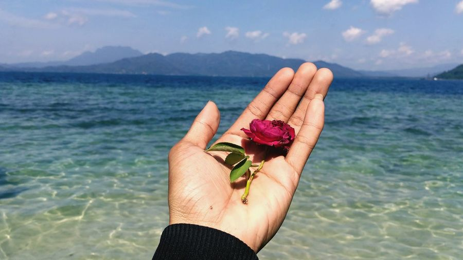 Cropped hand of woman holding flower over sea against sky