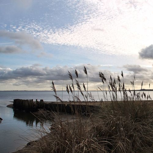 'Sing me whispering reeds in sounds that resound the stray's hearts careless noise. You that sang to me once, sing to me now' In The Landscape Tadaa Community Life Is A Beach Cloud And Sky