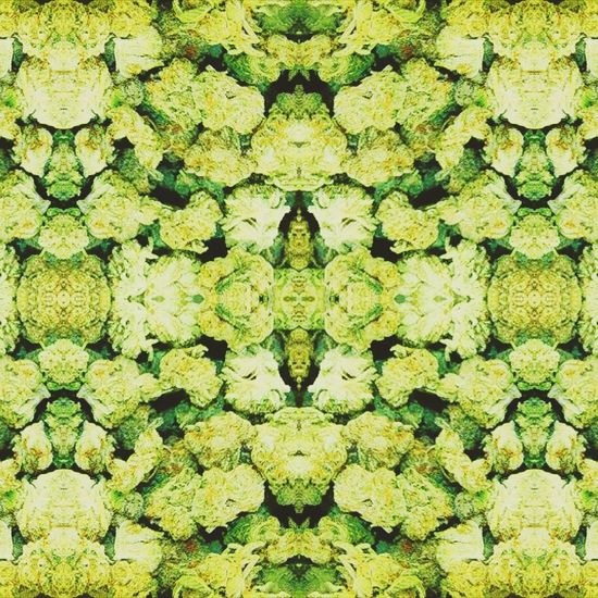 nugs Backgrounds Textured  Weed Marijuana Marijuana Photography Mariposa Pattern Pyschedelic Stoned. 420 Life Wandering 420 WeedPorn 420 Photography Meredith Is Here:) EyeEmNewHere Art Love Textured  ArtWork