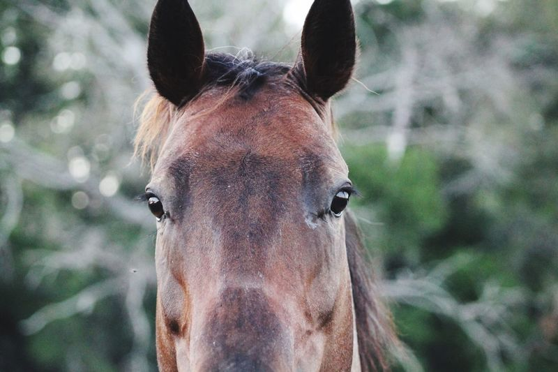 Jenny One Animal Animal Themes Horse Portrait Mammal Looking At Camera Focus On Foreground Animal Head  Day Close-up Domestic Animals Outdoors Animals In The Wild Animal Wildlife No People Nature EyeEm Selects Horseback Riding Animal Head  Working Animal