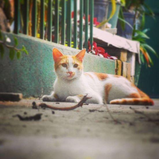 """Hasta el más pequeño de los felinos es una obra de arte - """"Leonardo da Vinci"""" Cat Mascota Gato Felino"""