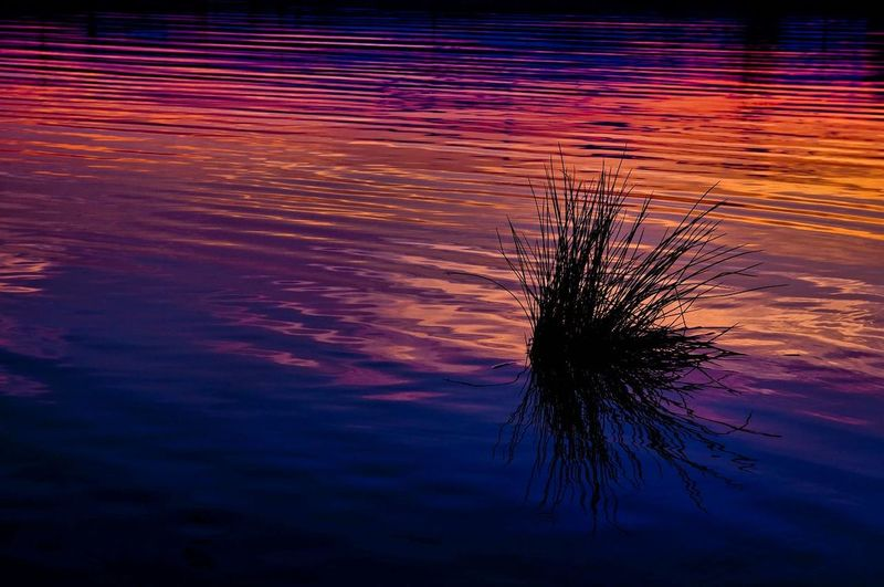 Close-up of silhouette plant against lake at sunset