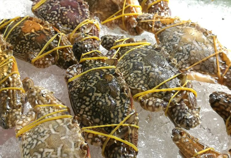 Eat Horse Pony Seafoods SEAFOOD🐡 Cooking Cook  Aquatic Food Food And Drink Crab Crab - Seafood Brine Prepare Food Fresh Food Delicious UnderSea Animal Themes Sea Horse Dried Fish  Seafood Shrimp