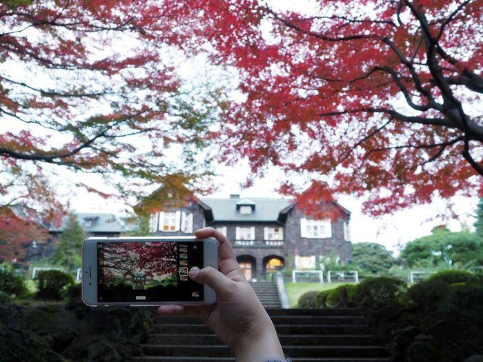 2018/12/08 Sat 🌃☀ #秋は駆け足 見頃だった頃の #旧古河庭園 に紅葉を撮影している女子大生。 あ、ちゃんとお話して許可頂きました、隠し撮りじゃありません(笑) 秋は駆け足 ファインダー越しの私の世界 旧古河庭園 ファインダーは私のキャンパス オリンパス Olympus E_M5Mark2 Om_d ミラーレス Photograph Photography Unsquares カメラ日和 お写んぽ 東京カメラ部 スナップ写真 Tokyo Beautiful カメラのある生活 あなたに見せたい写真がある 写真は心のシャッター 恋するカメラ はなマップ Human Hand Tree Photography Themes Photographing Branch Wireless Technology Close-up Sky