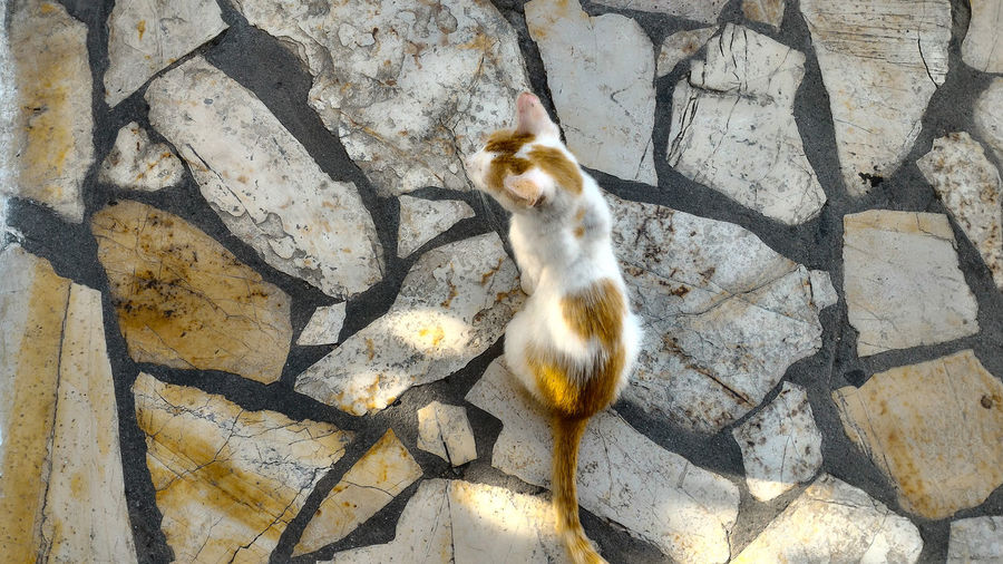 Cat on cobblestone