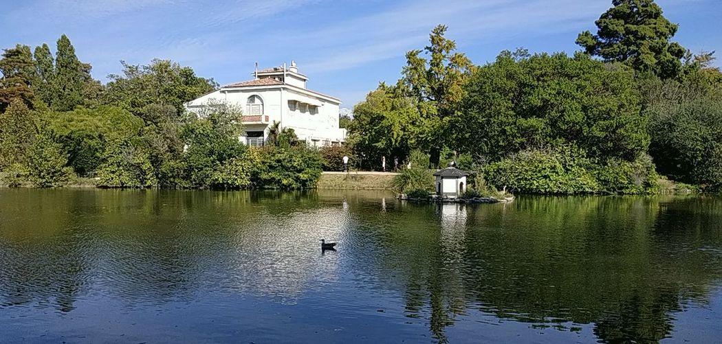 Bird Tree Water Nautical Vessel Lake Reflection Duck Sky Animal Themes Architecture