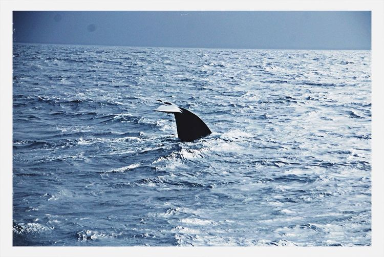 Blue whale!.