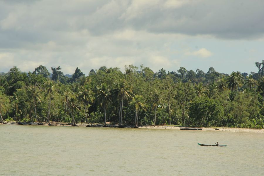 #mentawai #sikakap #nature # landscape #mentawai island #westsumatra #mentawaiisland #Nature  Sikakap Tradisional Fish Chatcher Lanscape Nature Tree Nautical Vessel Agriculture Tropical Tree Palm Leaf Coconut Coconut Palm Tree Boat Indian Ocean First Eyeem Photo